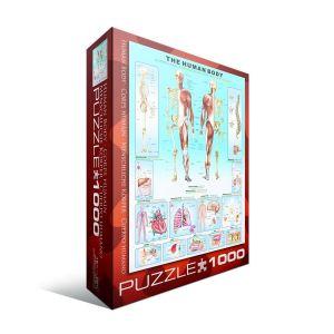 Пазл Eurographics Тело человека, 1000 элементов