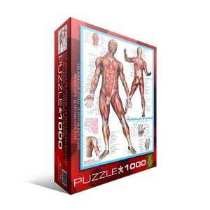 Пазл Eurographics Мышцы человека, 1000 элементов